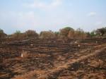 Mafia: fuoco su terreni confiscati