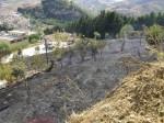 Libera e gli strani incendi dolosi in provincia di Trapani