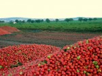 Tempo di pomodori