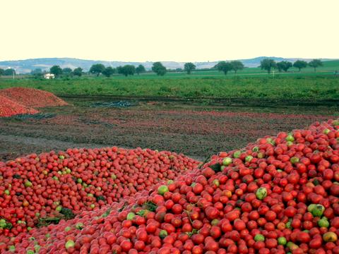 pomodori-ammassati