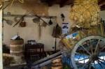 La raccolta di olive nel terreno che fu dei Messina Denaro