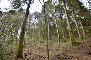 la foresta2