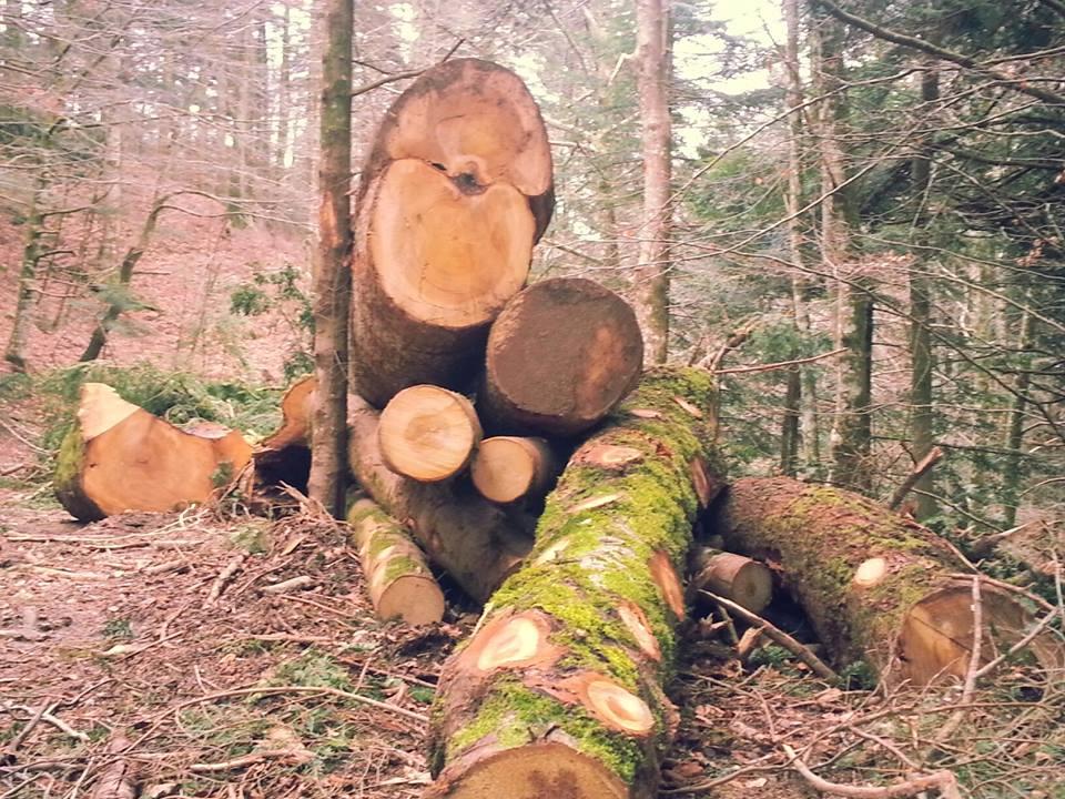 la foresta5